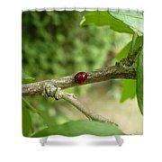 Lady Bug Branch Shower Curtain