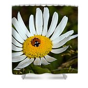 Lady Bug Bulls Eye  Shower Curtain
