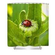 Lady Bug In The Garden Shower Curtain