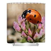 Lady Bug On Clover Shower Curtain