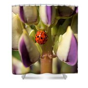 Lady Bug On Lupine Shower Curtain
