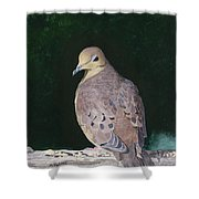 Lady Dove Shower Curtain