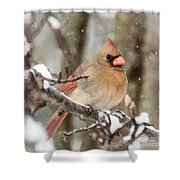 Lady In The Snow Shower Curtain