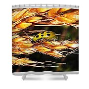 Lady Of A Different Color... Shower Curtain
