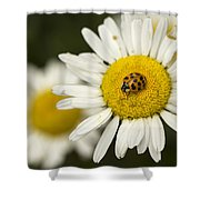 Lady Of The Daisy Shower Curtain