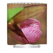 Lady Slipper At Moore State Park Close Up 1 Shower Curtain