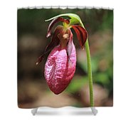 Lady Slipper At Moore State Park Close Up 2 Shower Curtain