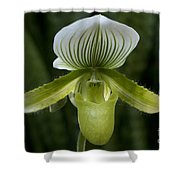 Lady Slipper Orchid Shower Curtain
