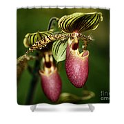 Lady Slipper Orchid Twins Shower Curtain