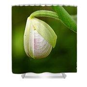 Lady Slipper Pearl Shower Curtain