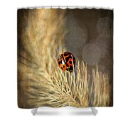 Ladybird Shower Curtain by Darren Fisher