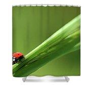 Ladybird On Green Leaf Shower Curtain