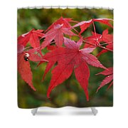Ladybird With Autumn Leaves Shower Curtain