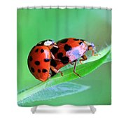Ladybug And Gentlemanbug Shower Curtain