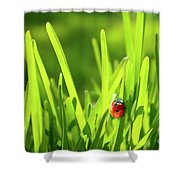 Ladybug In Grass Shower Curtain