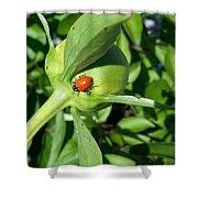 Ladybug Ladybug  Shower Curtain