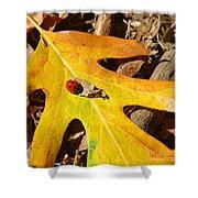 Ladybug Leafing By Diana Sainz Shower Curtain