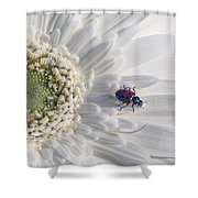 Ladybug On Daisy Petal Shower Curtain