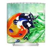 Ladybug On The Leaf Shower Curtain