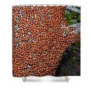 Ladybug Tree Shower Curtain