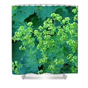 Lady's Mantel Shower Curtain