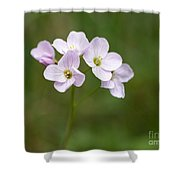 Ladys Smock Or Cuckoo Flower Shower Curtain