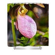 Ladyslipper  Wildflower Shower Curtain