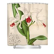 Laelia Elegans Shower Curtain by Philip Ralley