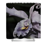Laeliocattleya Blue Boy 1 Of 2 Shower Curtain