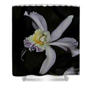 Laeliocattleya Jacki Stidham Shower Curtain