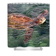 Lager Head Turtle 001 Shower Curtain