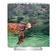 Lager Head Turtle 002 Shower Curtain