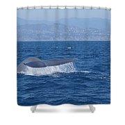Laguna Whale Shower Curtain