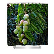 Lahaina Mango 1 Shower Curtain