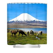 Lake Chungara Chilean Andes Shower Curtain by Kurt Van Wagner