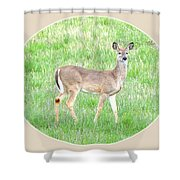 Lake Country Doe   Shower Curtain