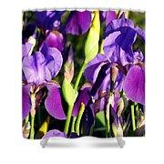 Lake Country Irises Shower Curtain