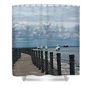 Lake Erie Gulls Shower Curtain