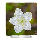 Lake Huron Wildflower Shower Curtain