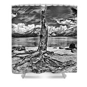 Lake Tenaya Giant Stump Black And White Shower Curtain