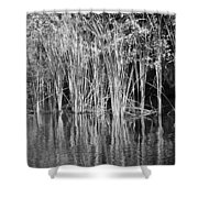 Lake Trafford Reeds Shower Curtain