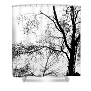 Lake - Tree  -  At The Lake By A Tree Shower Curtain