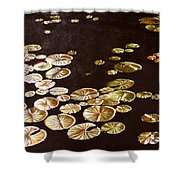 Lake Washington Lily Pad 10 Shower Curtain