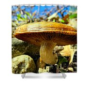 Lakeside Mushroom  Shower Curtain