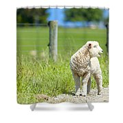 Lamb On The Farm Shower Curtain