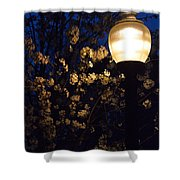 Lamplight 1 Shower Curtain