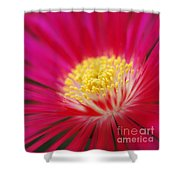Lampranthus Abstract Shower Curtain