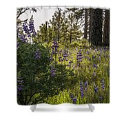 Land Of The Lupines Shower Curtain