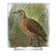 Land Rail Shower Curtain