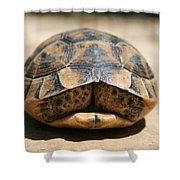 Land Turtle Hiding In Its Shell  Shower Curtain